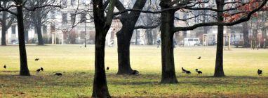Alaunplatz mit Krähen - März 2012