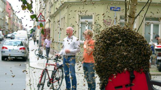 Bienenschwarm an der Talstraße