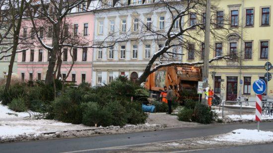 Baumentsorgung am Bischofsweg