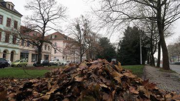 Mitarbeiter der Stadt putzten heute den kleinen Bautzner Park.