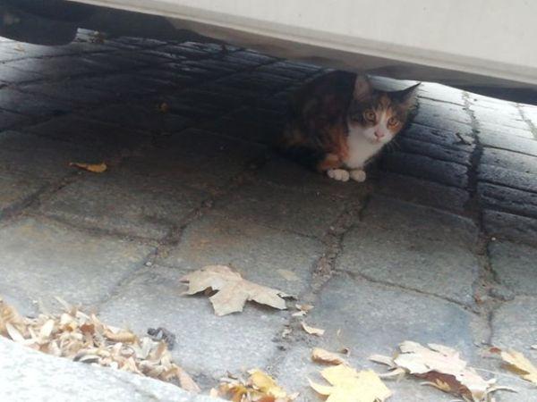 Wer vermisst die Katze?