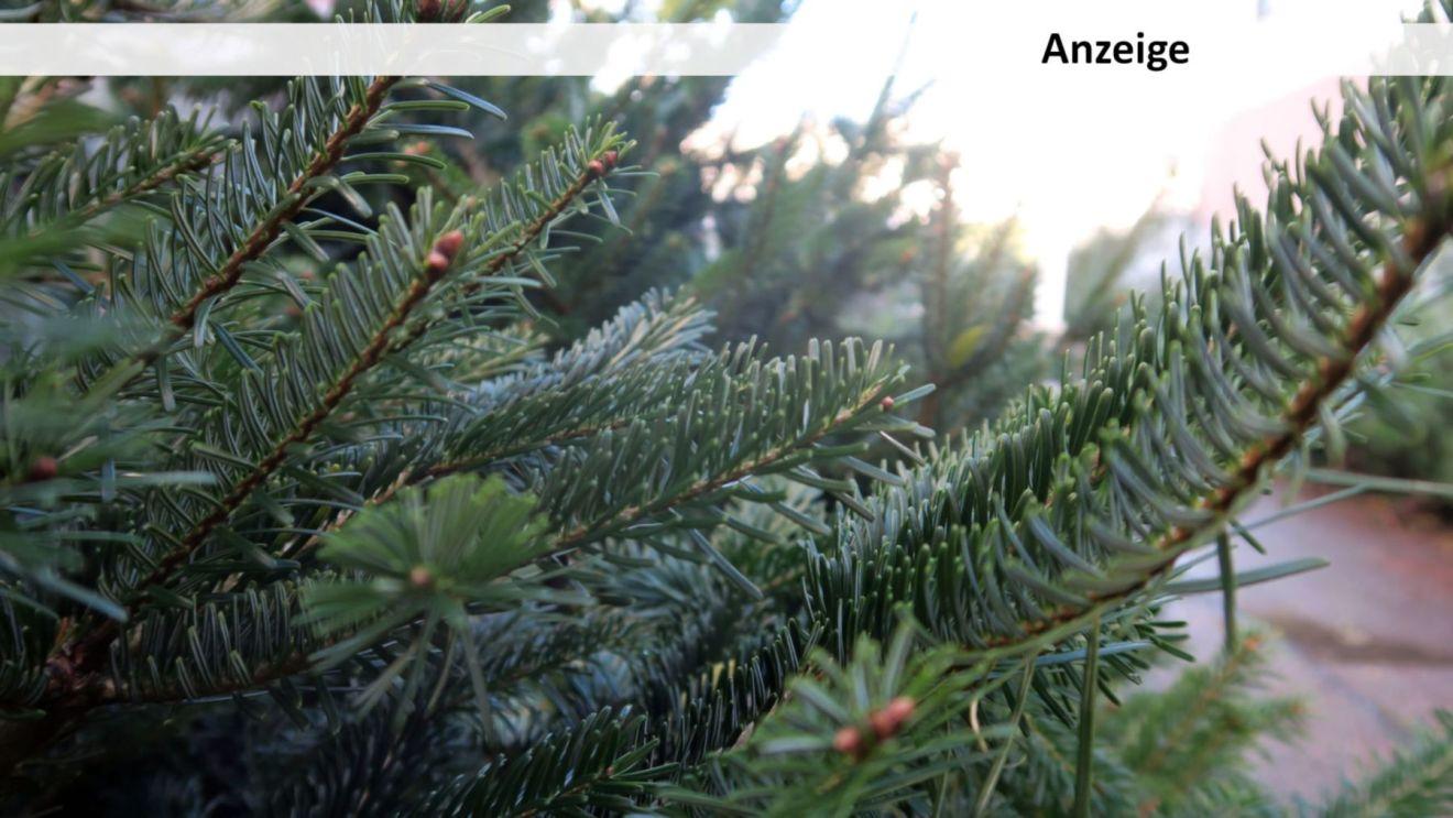 Weihnachtsbäume, so weit das Auge reicht.