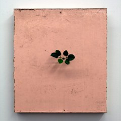 GM# 22: A ROSE BY ANOTHER NAME // Oil on board, Plastic Leaves // 53 x 47 cm // 2009