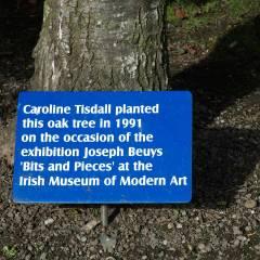 7,000 Oak Trees + 6,999 Basalt Stones // Digital Image // Vegetative Dimensions // 2005