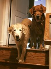 Trooper & Bean say leave the stress behind
