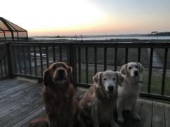 Bean, Trooper & Q sitting on deck at sunrise