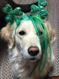 Carly with shamrock & ribbon head band