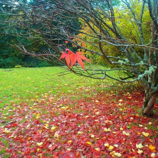 Never Ending Honeymoon | Autumn in Scotland