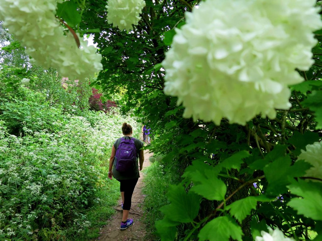 London Walks The Oak Trail flowers and Shiv