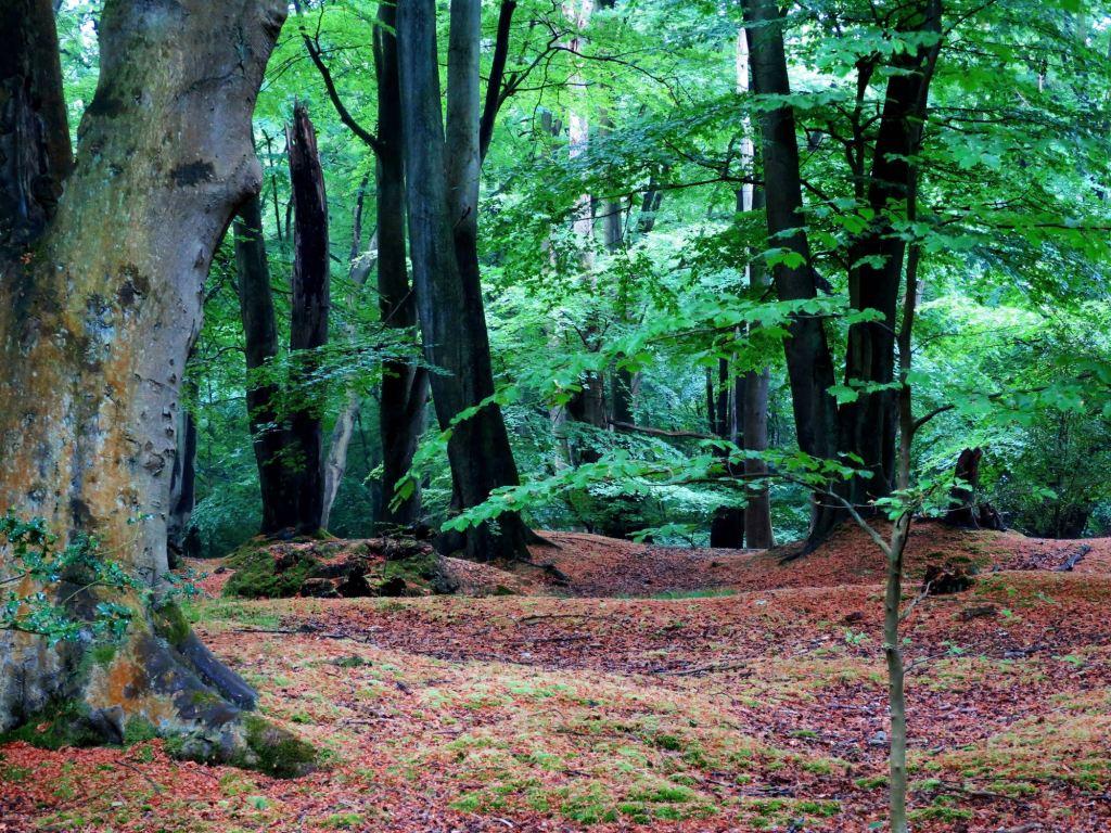 London Walks The Oak Trail the forest