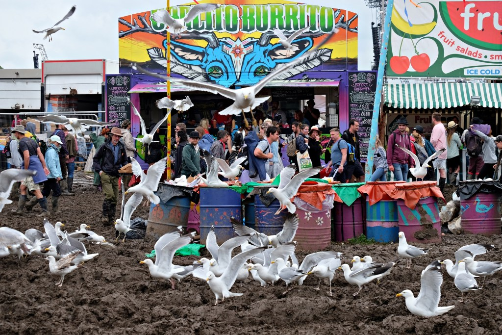 Glastonbury 2016 26 June Sunday day seagulls WS