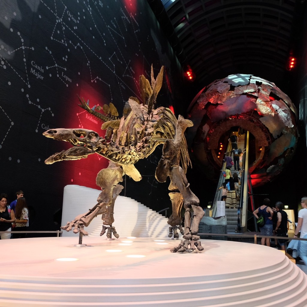 Sophie the Stegosaurus at Natural history Museum