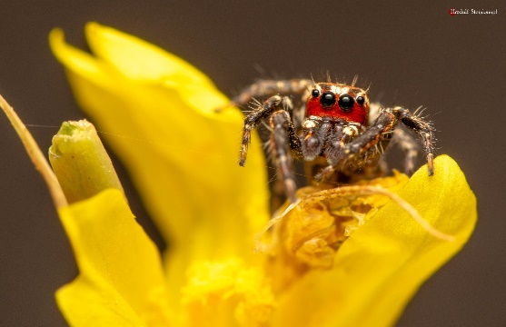 Don't fear spiders – they are not out to bite you post thumbnail image