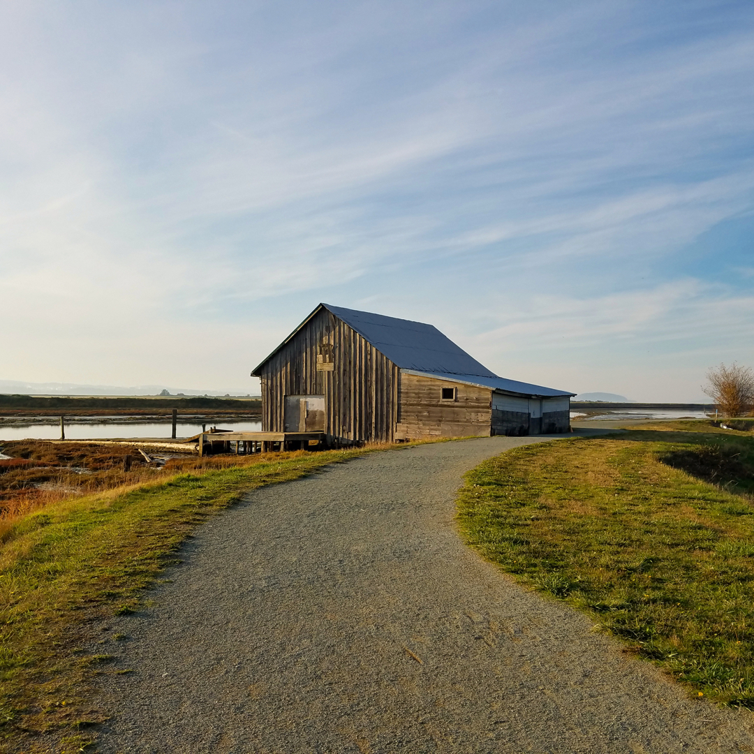 Local Adventures: Padilla Bay Trail