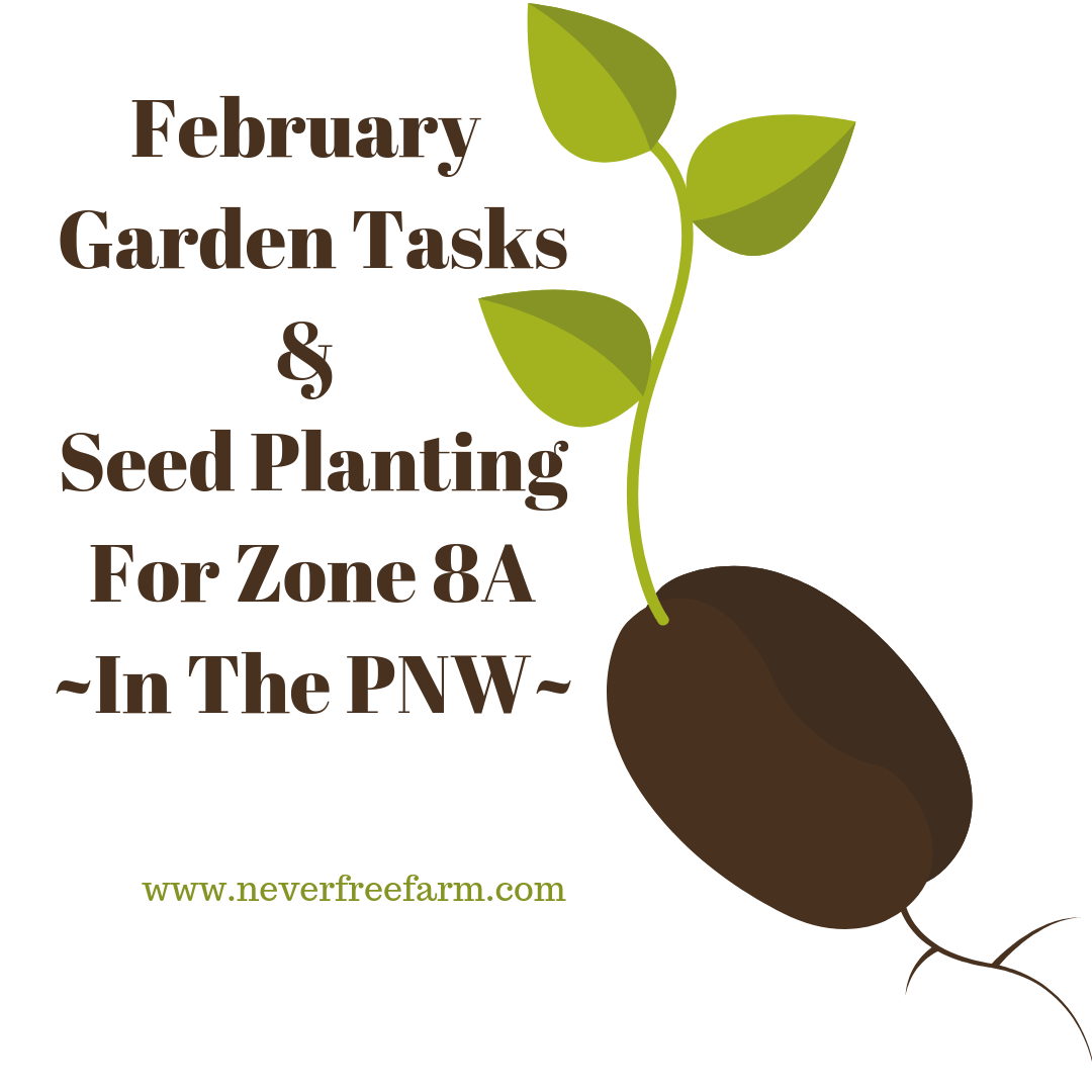 February Garden Tasks and Seed Planting (For Zone 8A PNW)
