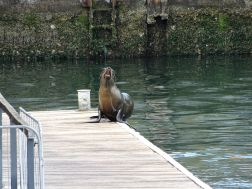 Sea Lion Observation