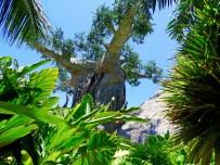 Loro Parque Artificial Boabab & Aviary