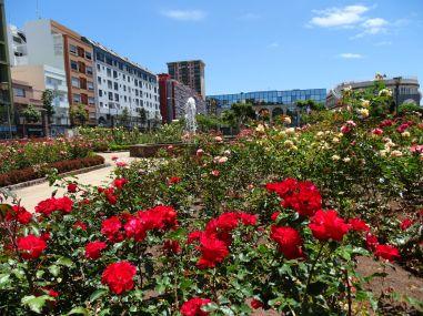 Rose Garden at Castillo de la Luz