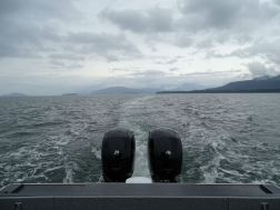 Whale - Watching Tour
