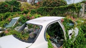 CAR B