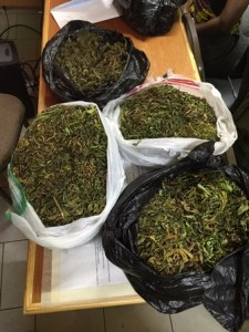 Drugs found during search on 07112015