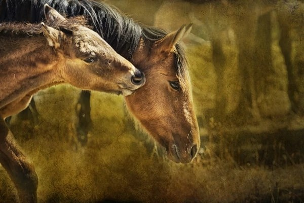 Featured Artist of the Month Belinda Greb