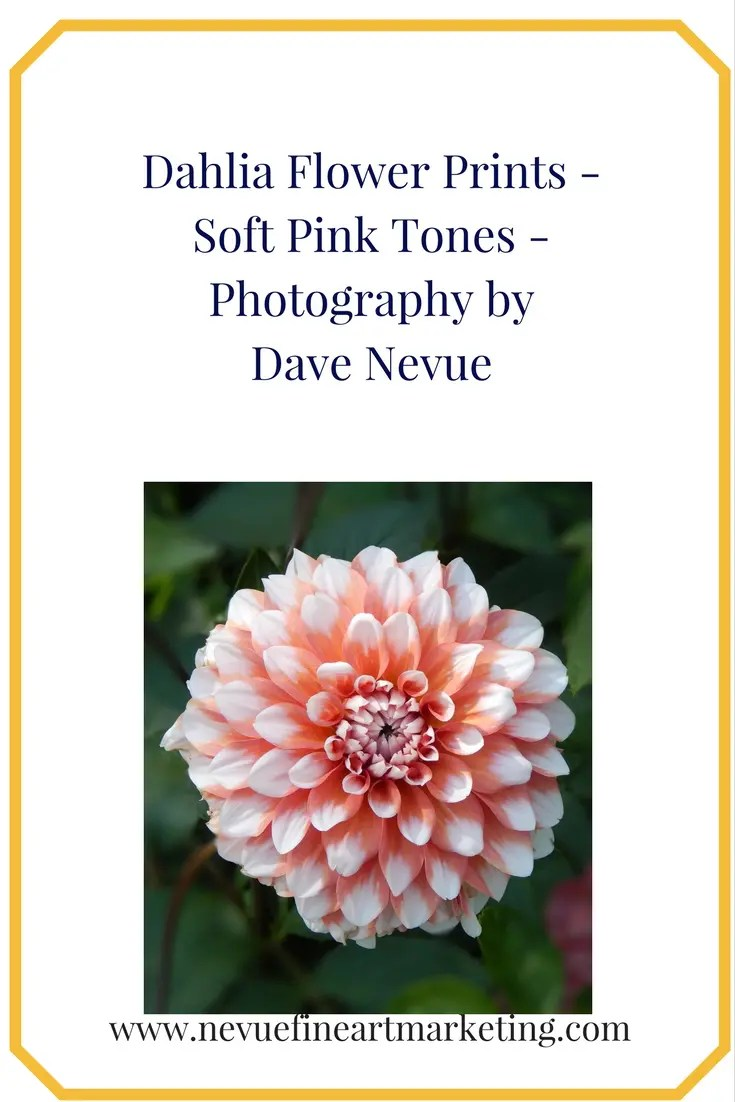 Dahlia Flower Prints - Soft Pink Tones - Photography by Dave Nevue