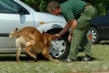 Polizeihund-Pkw-Absuche