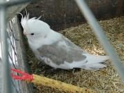 30-07-2013 ostallgäu schwangau papagei zugeflogen polizeifoto2 new-facts