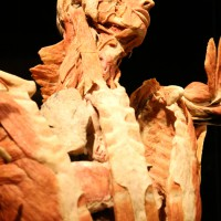 02-07-2014-muenchen-ausstellung-koerperwelten-hagen-poeppel-new-facts-eu (50)