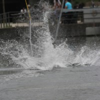 25-05-2015_BY_Memmingen_Wakeboard_LGS_Spass_Poeppel_new-facts-eu0647