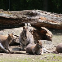 17-06-2015_Tierbilder_Augsburger-Zoo_Poeppel_new-facts-eu0040
