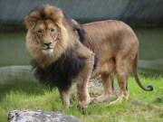 17-06-2015_Tierbilder_Augsburger-Zoo_Poeppel_new-facts-eu0129