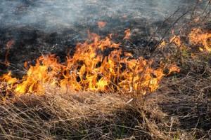 Flächen Brand Feuer