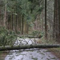 2018-01-04_Ravensburg_Gruenkraut_Strasse_umgestuerzte-Baeume_Unwetter_Poeppel_0001