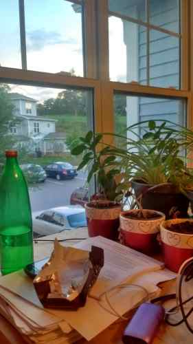 house plants in front of window