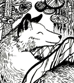 Close-up of the wolf's face in Wolf Fur Coloring Page