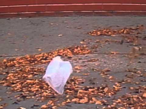 Plastic bag scene from the film 'American Beauty'