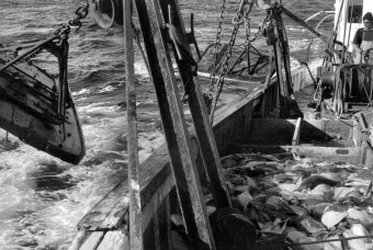 """The """"otter doors"""" lower the net to the ocean floor. Principle of the otter doors was brought from Europe by Scandanavian fishermen. Note the gallows frame set inside the rail fore and aft to hook up the doors when they are hauled in. Photo by Joseph Thomas"""