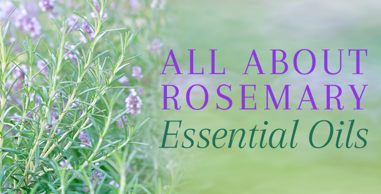 Rosemary Oil Therapeutic Benefits Uses Of Rosemary Essential Oil