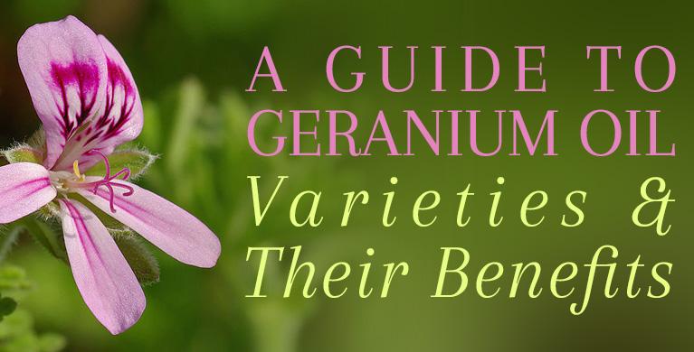 Geranium Oil Benefits Uses For Glowing Skin Healthy Looking Hair