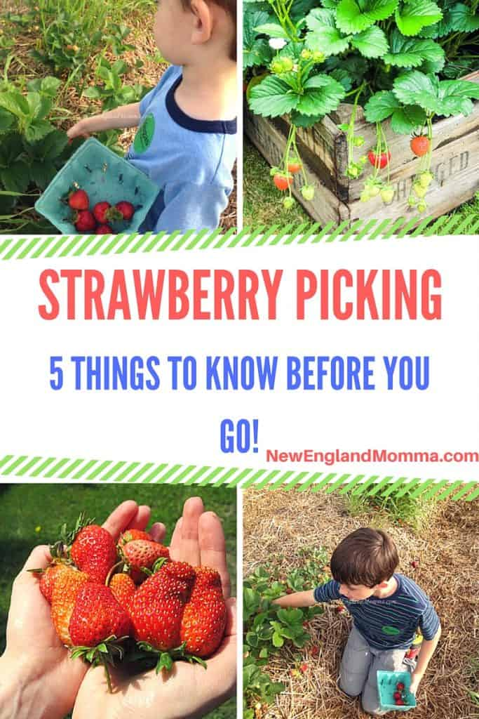 Strawberry Picking Title
