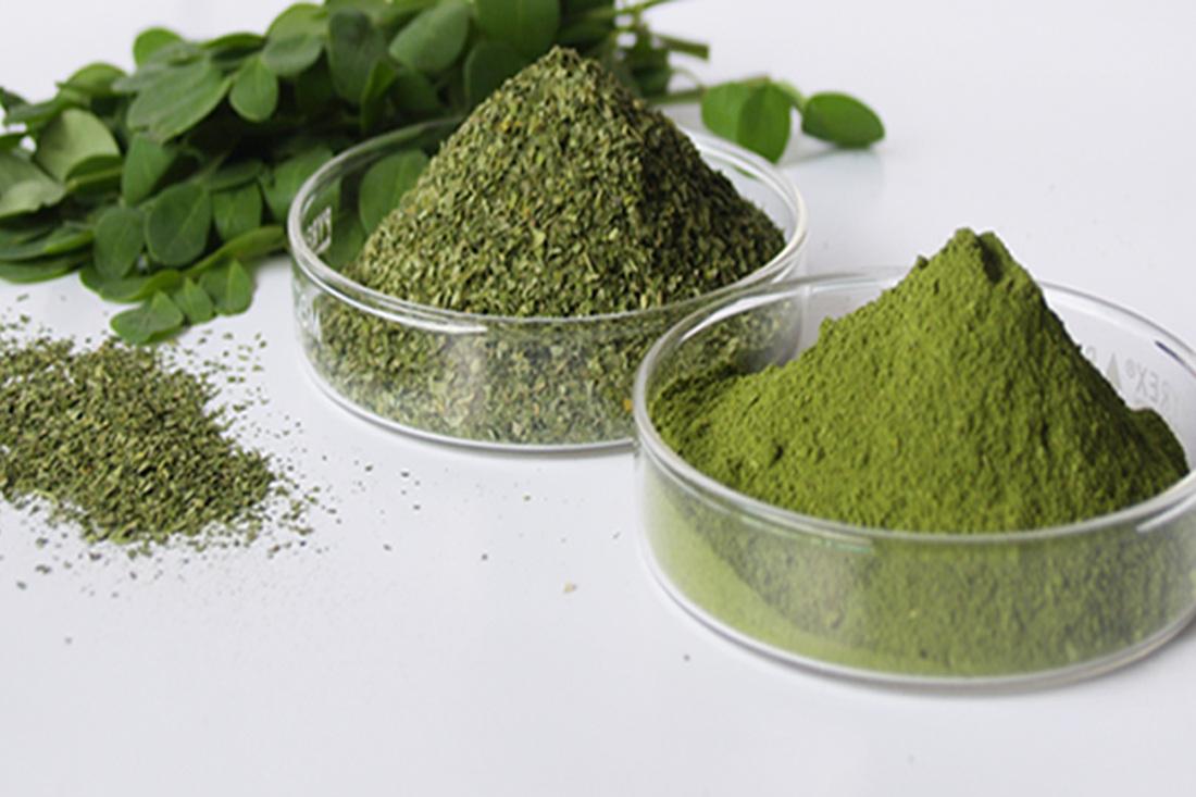 Moringa oleofera leaves and powde