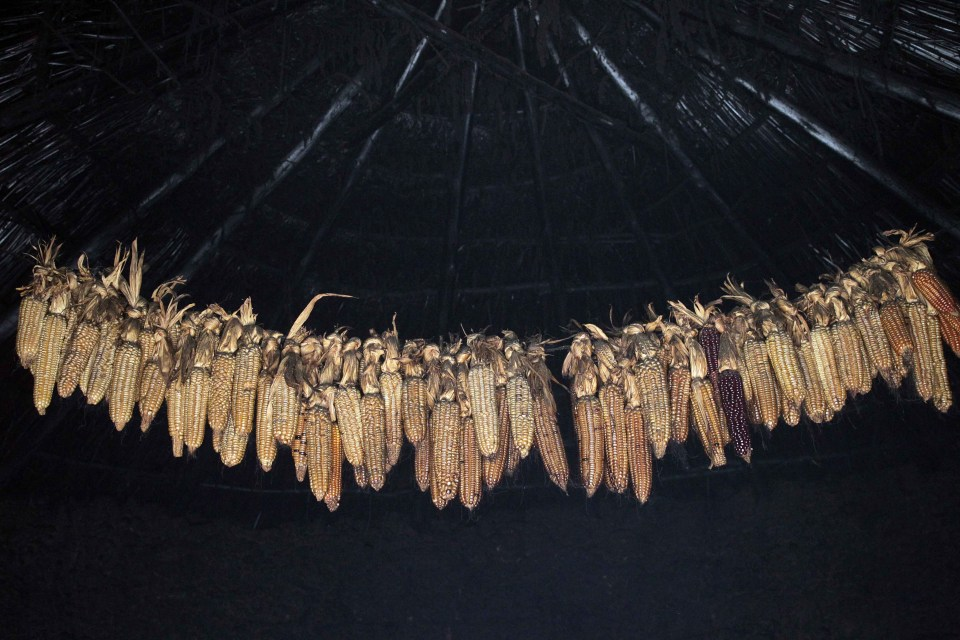 Small-scale farmers have been storing and sharing traditional varieties of maize seeds for generations. Photograph by: Gcina Ndwalane