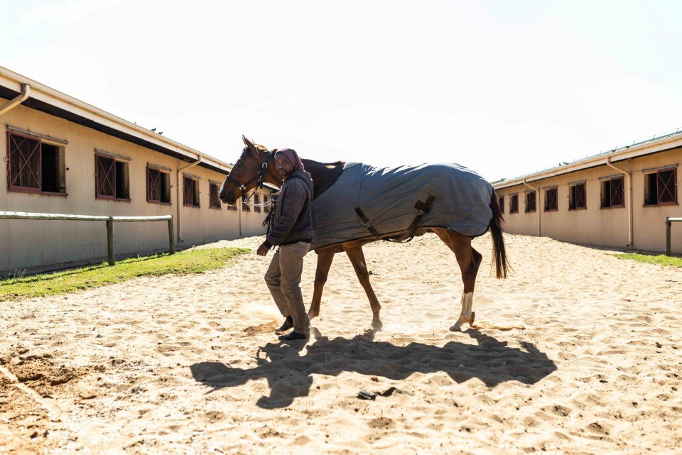27 July 2018: A groom with a horse at the stables in North Rand Training Centre in Randjesfontein near Midrand.