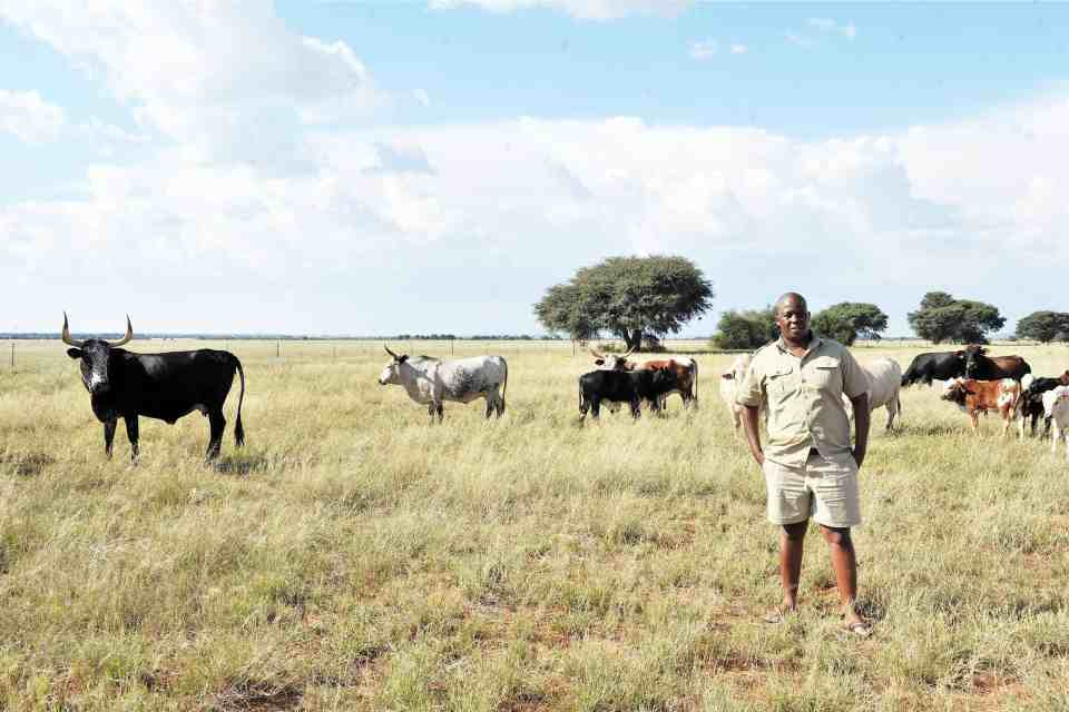 "25 April 2015: Motlapele ""Mo'Molemi"" Morule stands near his Nguni cattle during an interview at his farm, Bakang, in Mahikeng. (Photograph by Gallo Images/City Press/Elizabeth Sejake)"