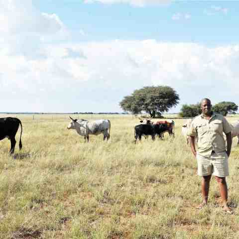 """25 April 2015: Motlapele """"Mo'Molemi"""" Morule stands near his Nguni cattle during an interview at his farm, Bakang, in Mahikeng. (Photograph by Gallo Images/City Press/Elizabeth Sejake)"""