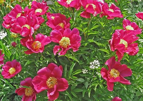 gardenslider11