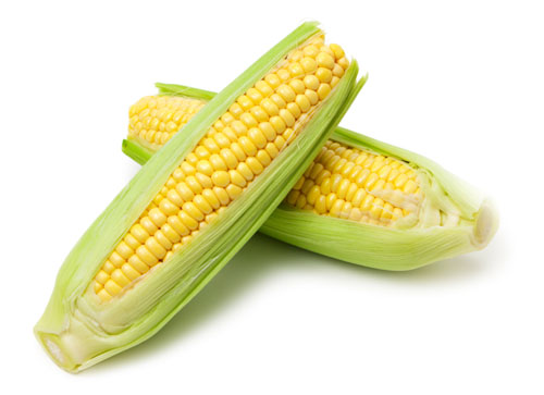Image result for image of corn on the cob