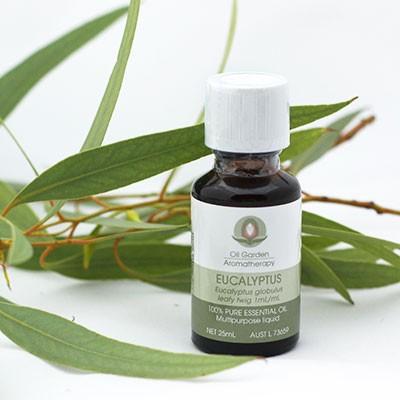 DIY Holistic Beauty Eucalyptus Essential Oil Eucalyptus Branch